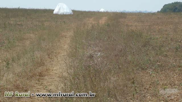 FAZENDA PARA SOJA/GADO DE 4114 HECTARES EM CABIXI-RO
