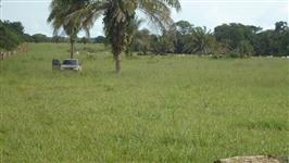 Fazenda Arinos/Chapada Gaúcha/MG, 250 km de BRB, 1600 ha, área da SUDENE