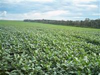 Fazenda para arrendar, batata ou cereais com 400 hectares em Pratinha - MG.