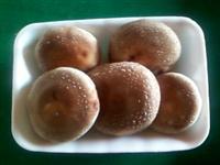 Shitake em bandejas de 200 gramas, sacos de 2.500 gramas