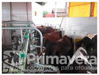 CONTENÇÃO PARA ORDENHA ESPINHA DE PEIXE 2X4 ( 08 VACAS) SEMINOVA