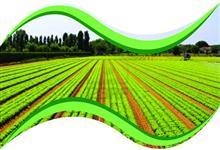 F�SFORO P 30% LIQUIDO (desenvolvido para o fornecimento de F�sforo via foliar)