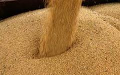 Procuro produtores de grãos para parceria na região de São Carlos SP