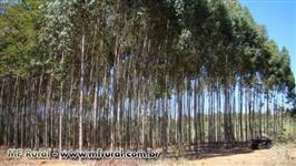 Compramos e vendemos lenha de eucalipto
