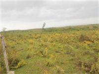Fazenda 485 Hectares