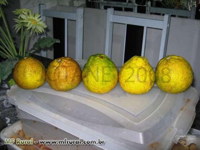 Limão Doce -Variedade