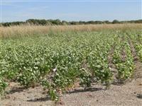 Fazenda para soja e milho safrinha
