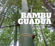 Bambu Guadua o verdadeiro 1001 utilidades com 30% de DESCONTO