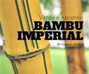 BAMBU IMPERIAL