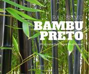 Bambu Preto (Phyllostachys nigra muchisasa)