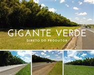 BAMBU GIGANTE VERDE - DIRETO DO PRODUTOR