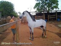 potro/cavalo 4,5 anos garanhaõ branco; 5,5anos baio preço cada