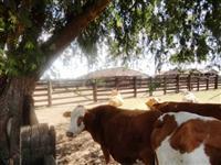 Fazenda de 430 alq.(2.081 há.) em Araguapaz-Go