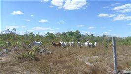 Fazenda de 181 alq. (876 ha.) em Santa Rita Tocantins To