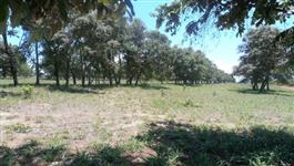 Fazenda de 232 alq. (1.123 ha.) Na regiao de Jussara -Go