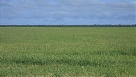 Fazenda de 1.150 alq.(5.566 há.) Dueré – To