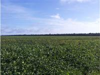 Urgente! vendo fazenda de 4.000 ha para lavoura no Tocantins com dívida no Banco