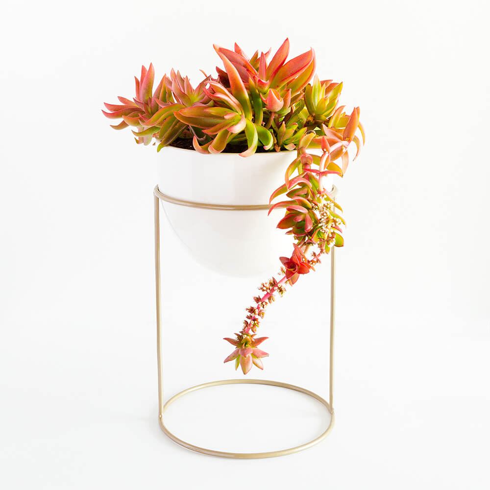 Pedestal dorado mate 30cm maceta mi mercadito macetas deco cactus suculentas - Pedestal para plantas ...