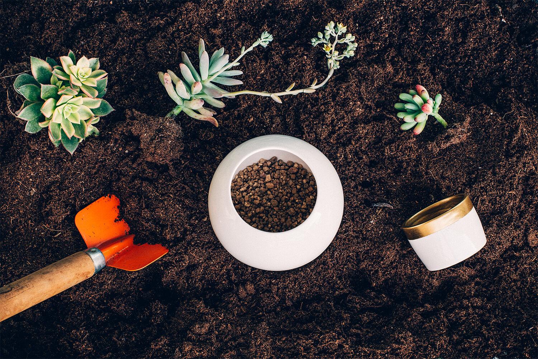 La fórmula Secreta: Sustrato para Cactus y Suculentas.
