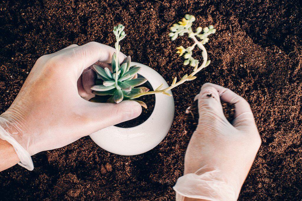 Plantando Maceta Esfera de Mi Mercadito