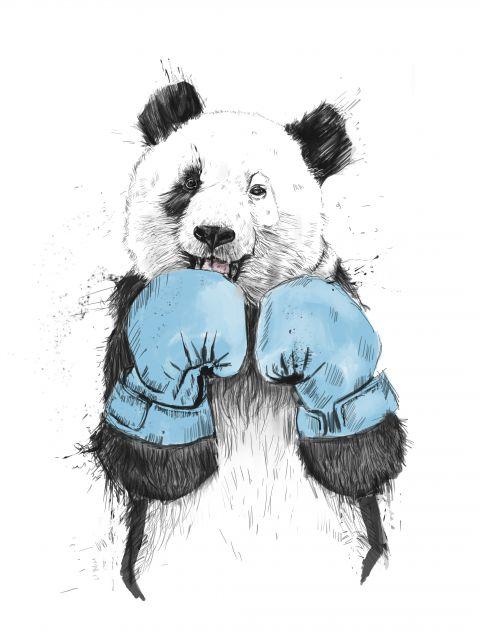 Poster Panda Boxeador