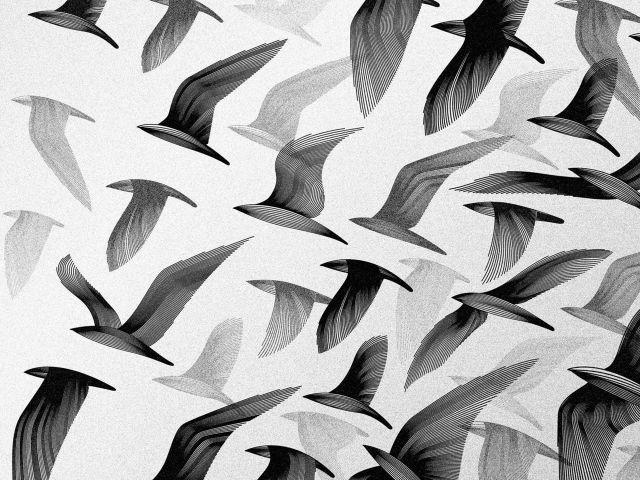 Poster Pássaros Voando