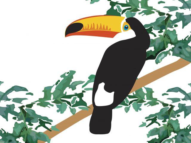 Poster Tucano Minimalismo