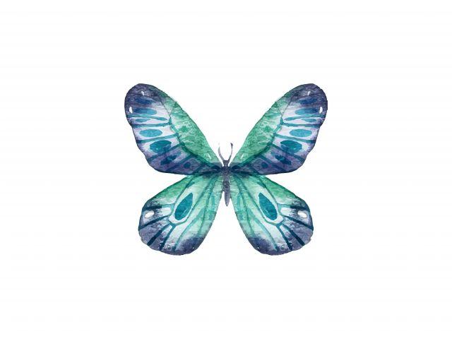 Poster Borboleta Azul