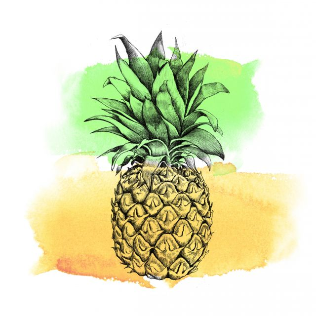 Poster Abacaxi Aquarela II   fruta
