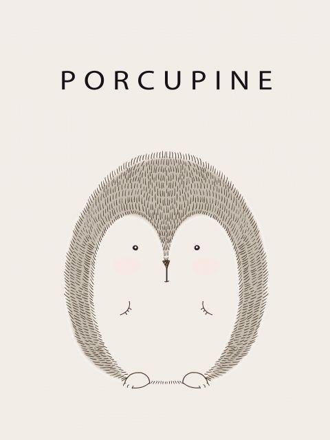 Poster Porco espinho porcupine