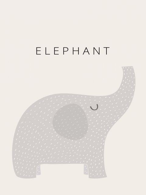 Poster Elefante Elephant