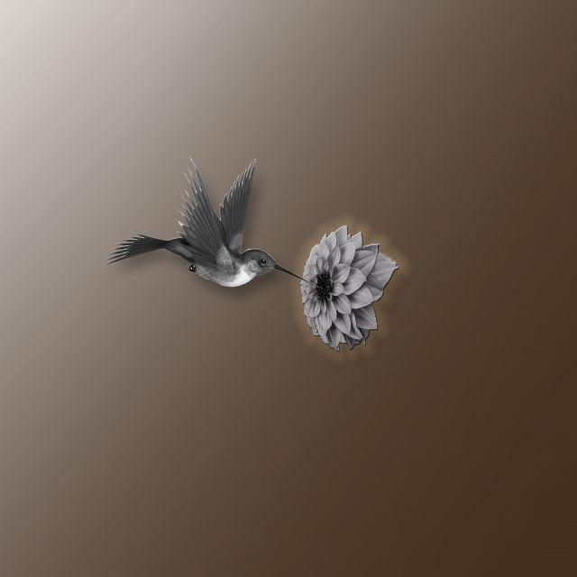 Poster beija-flor-1   marrom