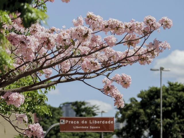 Poster Praça da Liberdade   árvore