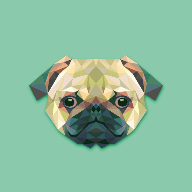 Poster Cão Dog