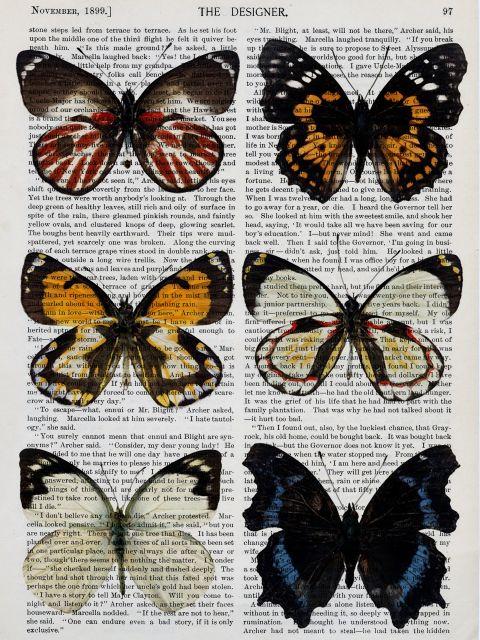 Poster Coleção Borboletas I