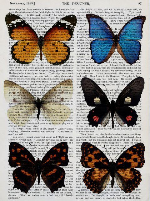 Poster Coleção Borboletas V