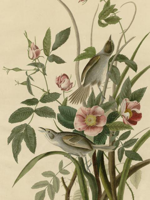 Poster Seaside Finch