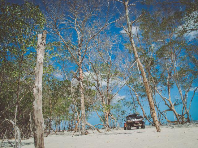 Poster Mangue Seco   árvores