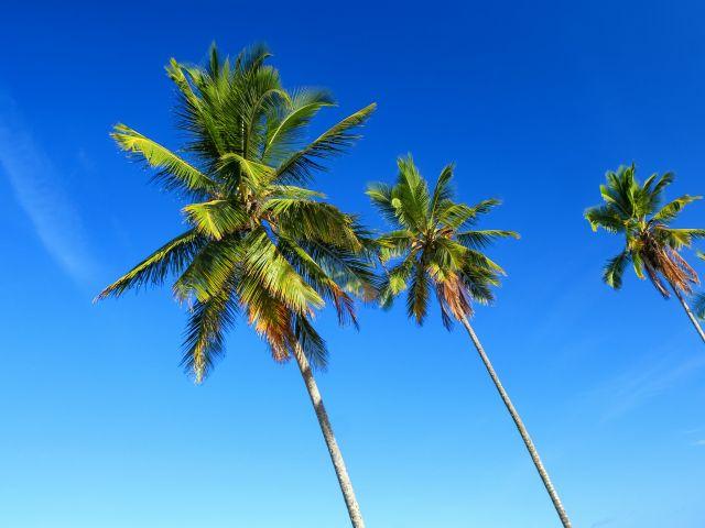 Poster Coqueiros 2   árvore céu