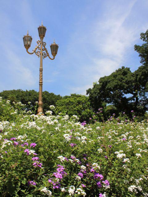 Poster Jardim   flores