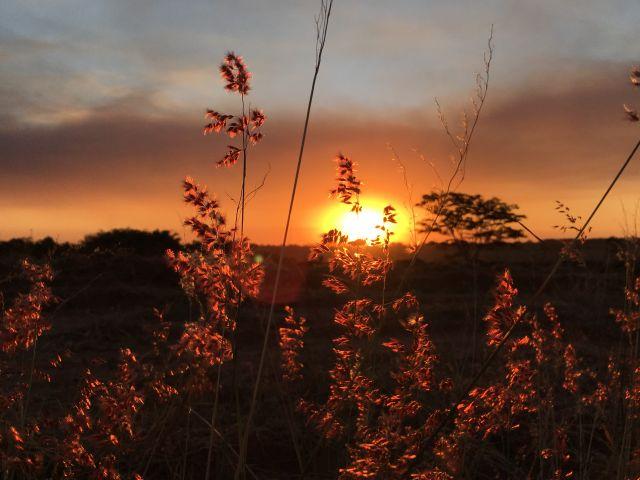 Poster Pôr-do-sol   sol flores
