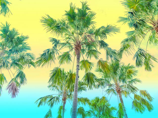 Poster Férias tropicais II