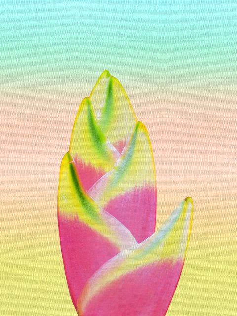 Poster Férias tropicais IV