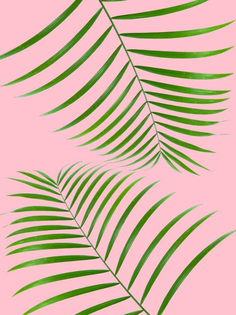 Poster Cortina tropical