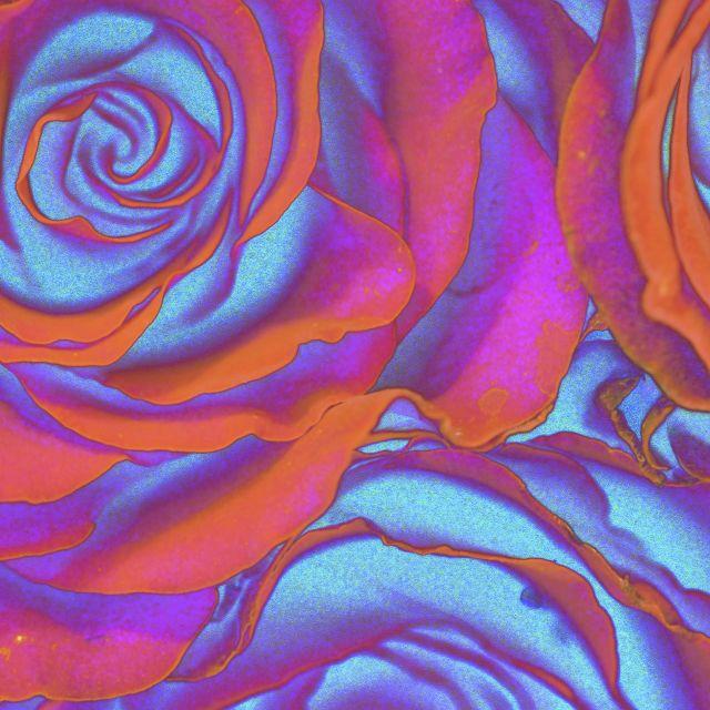 Poster Rosas Metálicas