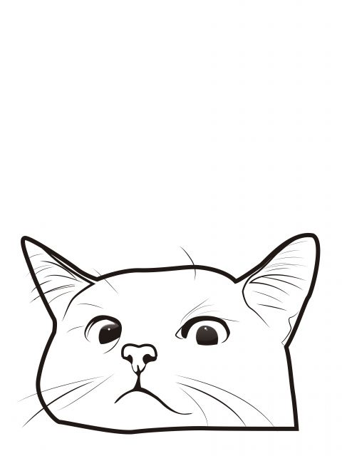 Poster Gato Escondido   cat