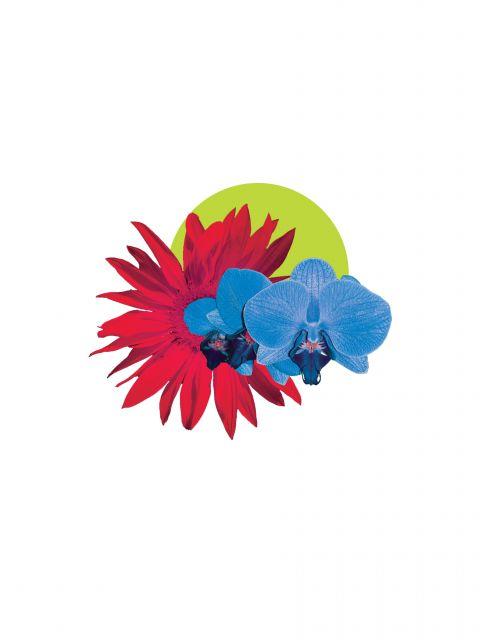 Poster Colagem - Flores Supersaturadas