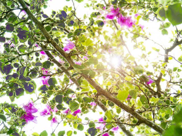 Poster No jardim   Flores Folhas
