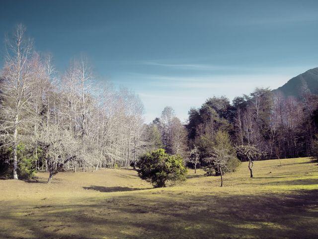 Poster Cores   paisagem verde