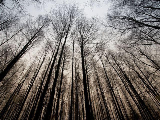 Poster Nas alturas   árvores